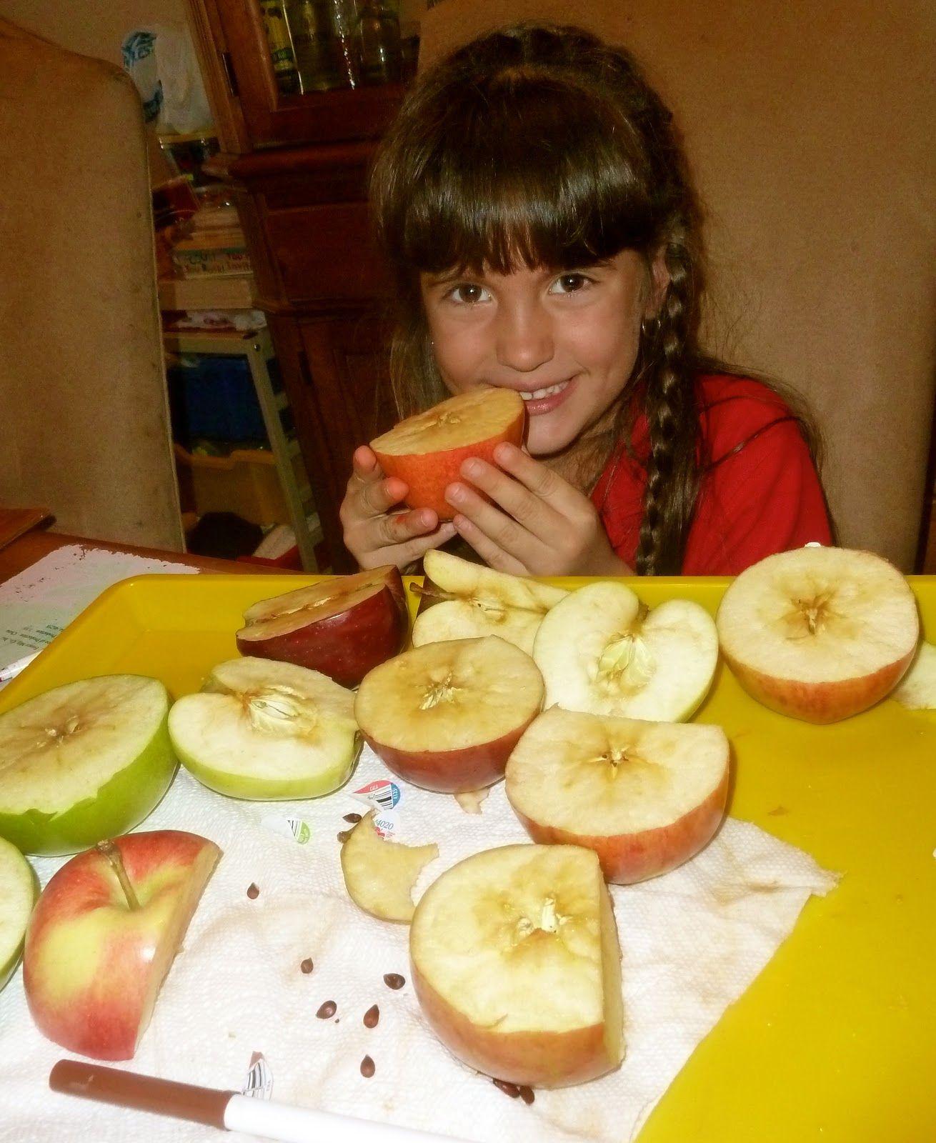 Exploring Tasting Amp Stamping Apples