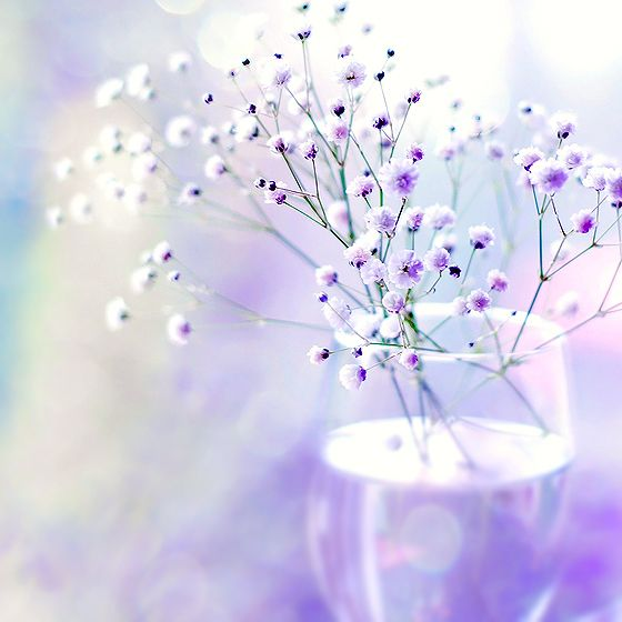 Faded With Images Beautiful Flowers Flowers Purple Flowers