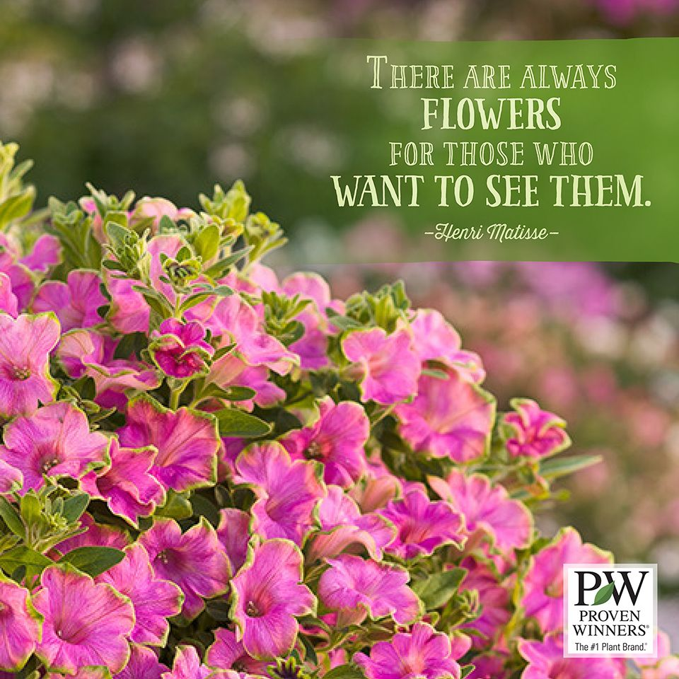 Treasure the flowers around you. Flower quotes, Flowers