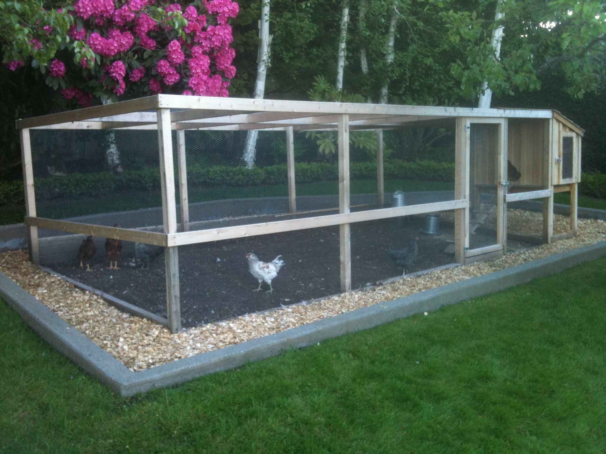 chicken runs coops yards and farming