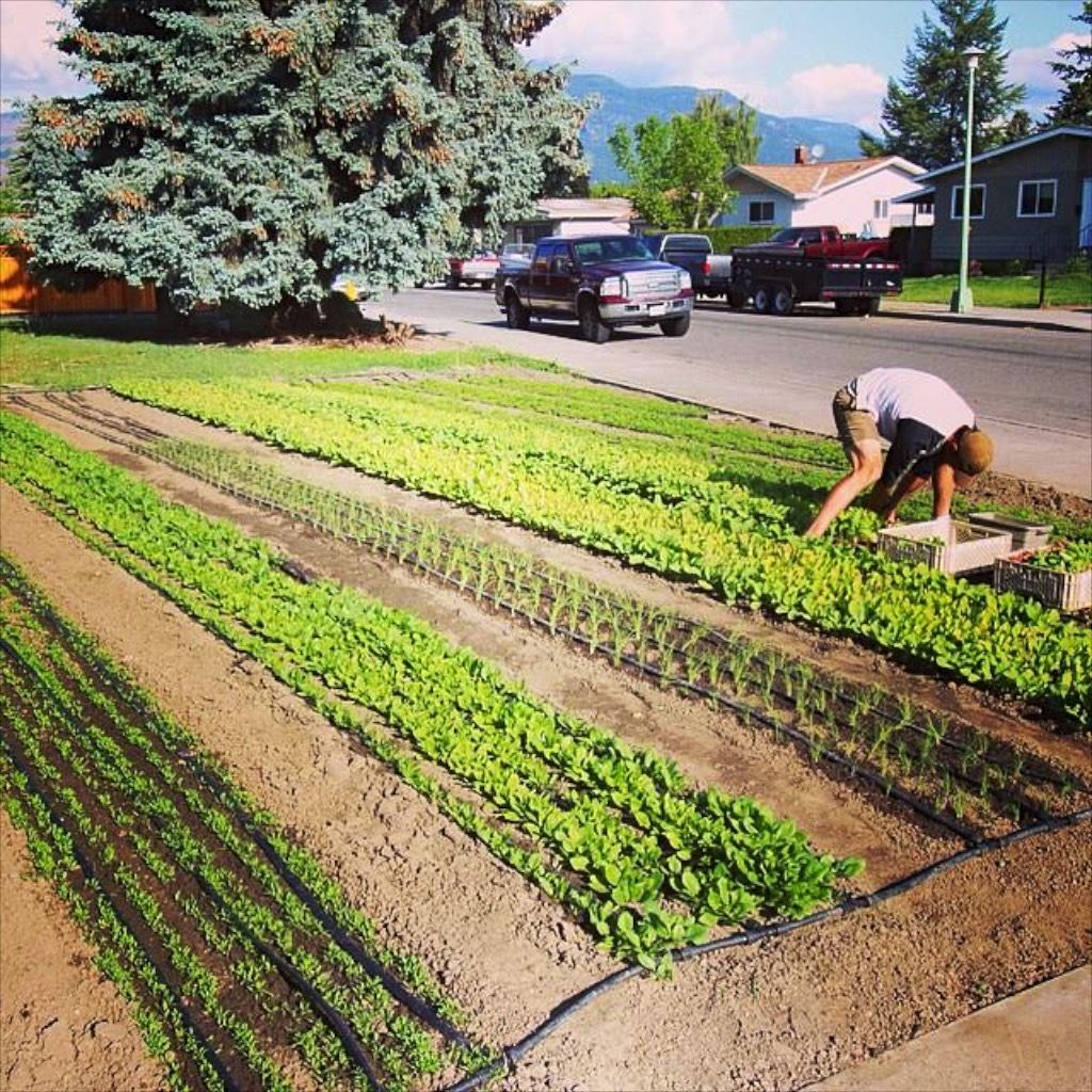 Learning How To Establish A Profitable Urban Farm Takes A Lot Of Planning And Thinking It S Certainly Not Just Abou Urban Farming Urban Farmer Online Courses Is backyard farming profitable