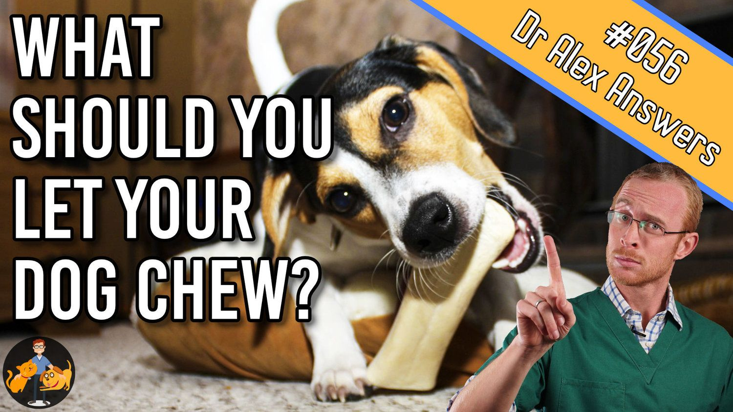 Are Nylabones Safe For Dogs What Are The Best Chew Toys
