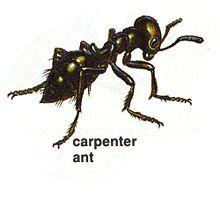 1d9468f02df9887c6d75a8d5a0baa259 - How To Get Rid Of Ants Safely Around Pets