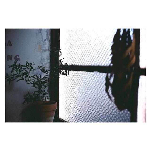 #フィルムに恋してる #film_jp #ふぃるむ寫眞 #フィルムの灯を絶やさない #フィルム写真部 #tokyocameraclub #photographyislife #indy_photolife #キリトリセカイ #生活とフィルム #thefilmcommunity #フィルム写真撮ってる人と繋がりたい #写真で伝えたい私の世界 #フィルムカメラ #filmphotography #film #filmcamera #キタムラ写真投稿 #photo_jpn #phos_japan #indies_gram #igersjp #写真好きな人と繋がりたい #contaxaria #フィルム #analogfilm #analoguepeople #filmfeed #analogue #filmcommunity