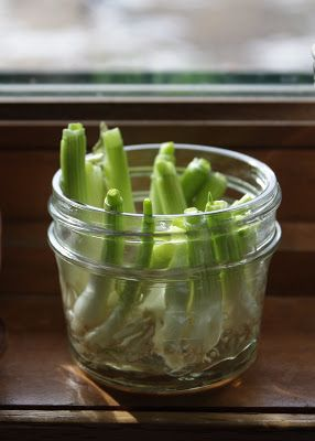 Next time you buy green onions, save the bulb and toss it in a jar of water and you'll have a whole new bunch in 12 days!