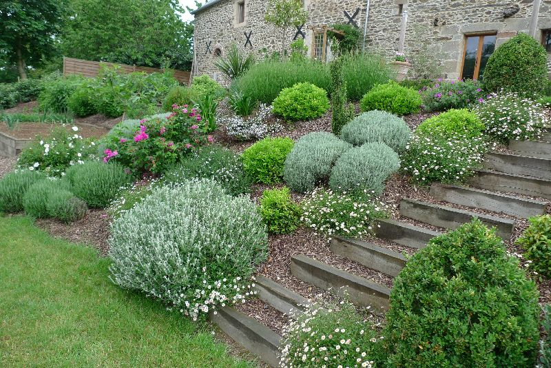 massif plantes aromatiques escalier bois a corseul sloped gardens pinterest inspiration. Black Bedroom Furniture Sets. Home Design Ideas