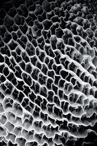 Tommaso sartori grids pinterest surface pattern for Tommaso sartori