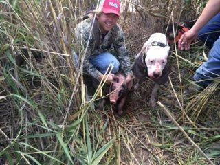 Dogo Argentino Hog Hunting Hunting Dogs Hog Dog