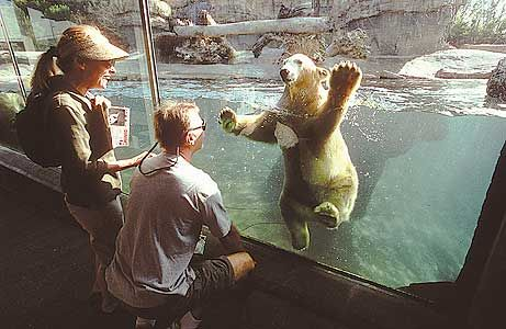San Diego Zoo Visit In A Week Psyched About Polar Bears