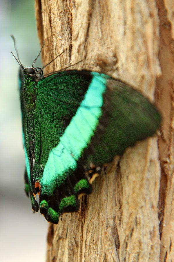 Funny Wildlife, senerii: Machaon émeraude by MetallYZA on...