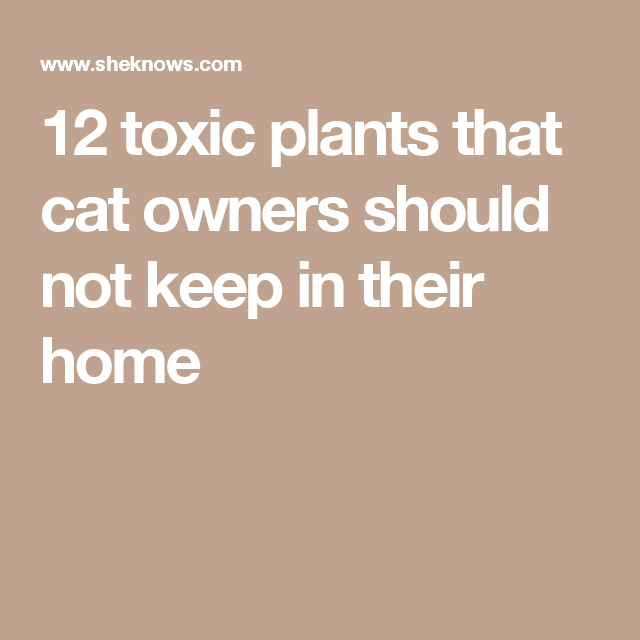 12 toxic plants that cat owners should not keep in their home