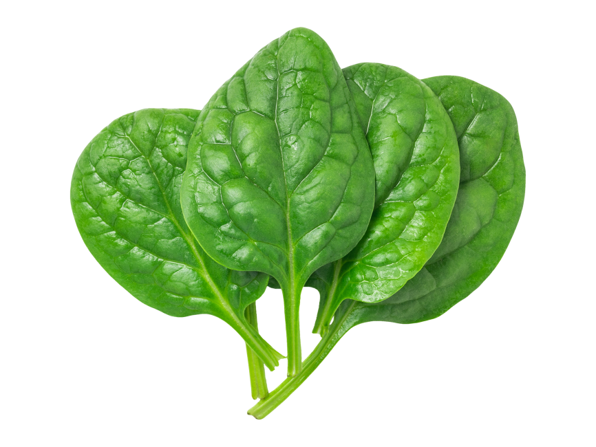 Spinach Leaves transparent image. Download free Spinach
