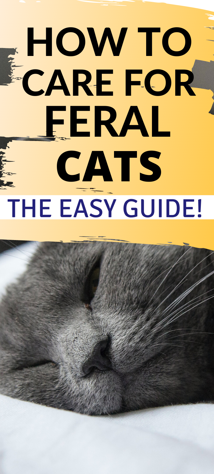 What You ACTUALLY Need To Know About Feral Cats Live