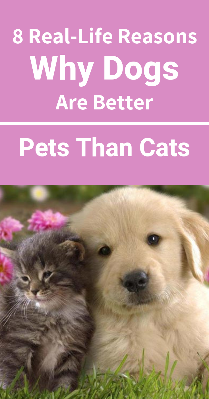 8 RealLife Reasons Why Dogs Are Better Pets Than Cats