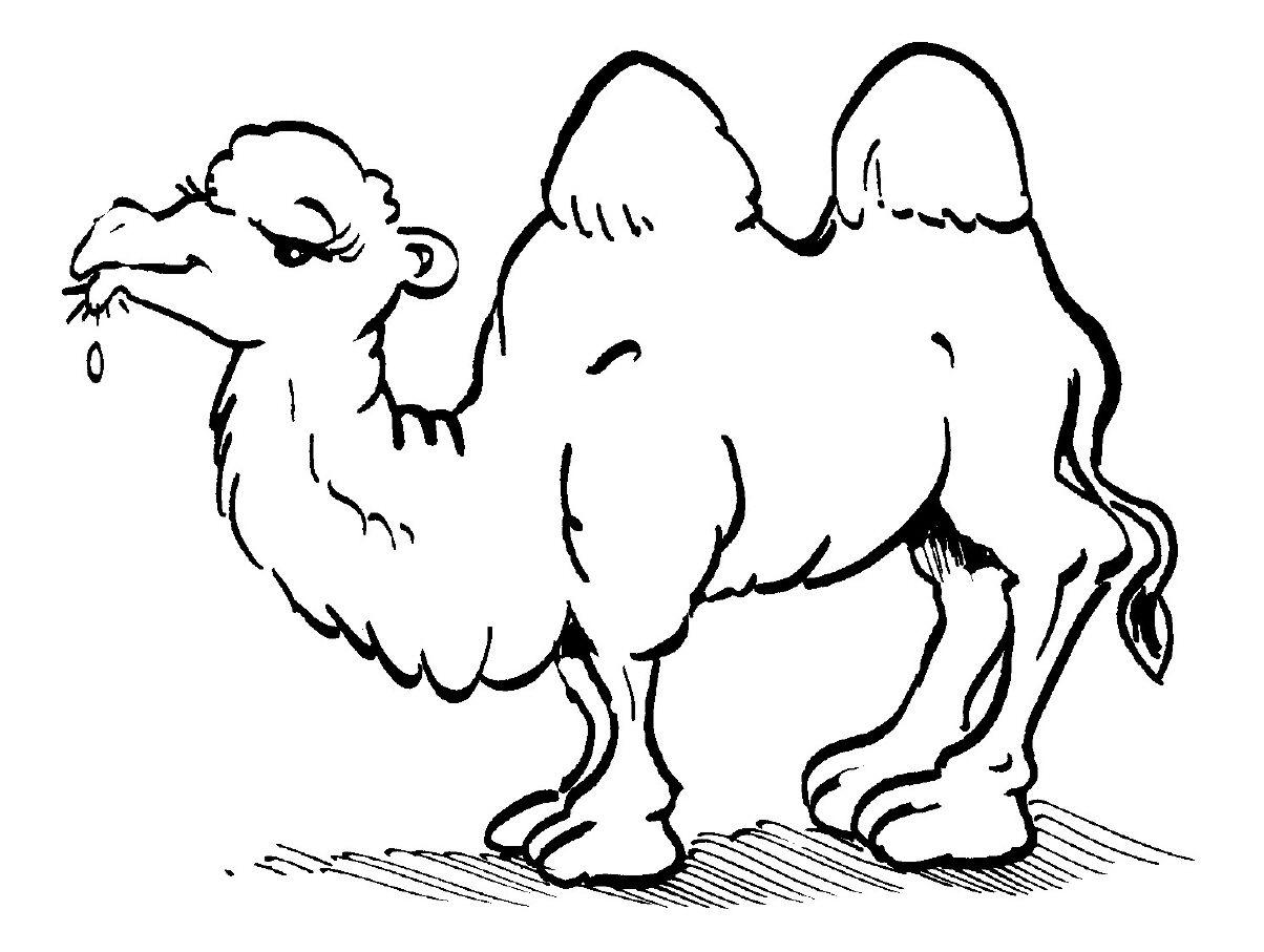 Atemberaubend Dromedar Kamel Malvorlagen Zeitgenössisch - Beispiel ...