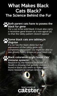 For Black Cat Appreciation Day We Have The Science Behind The Fur Black Cat Appreciation Day Black Cat Cat Facts