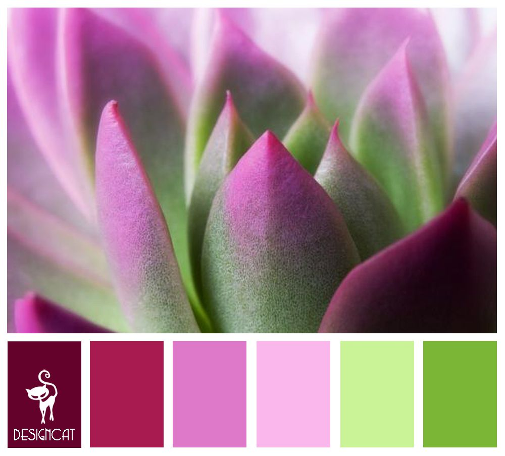 Cacti mauve pink pastel green colour inspiration pallet it s a colourful world - Mauve wandfarbe ...