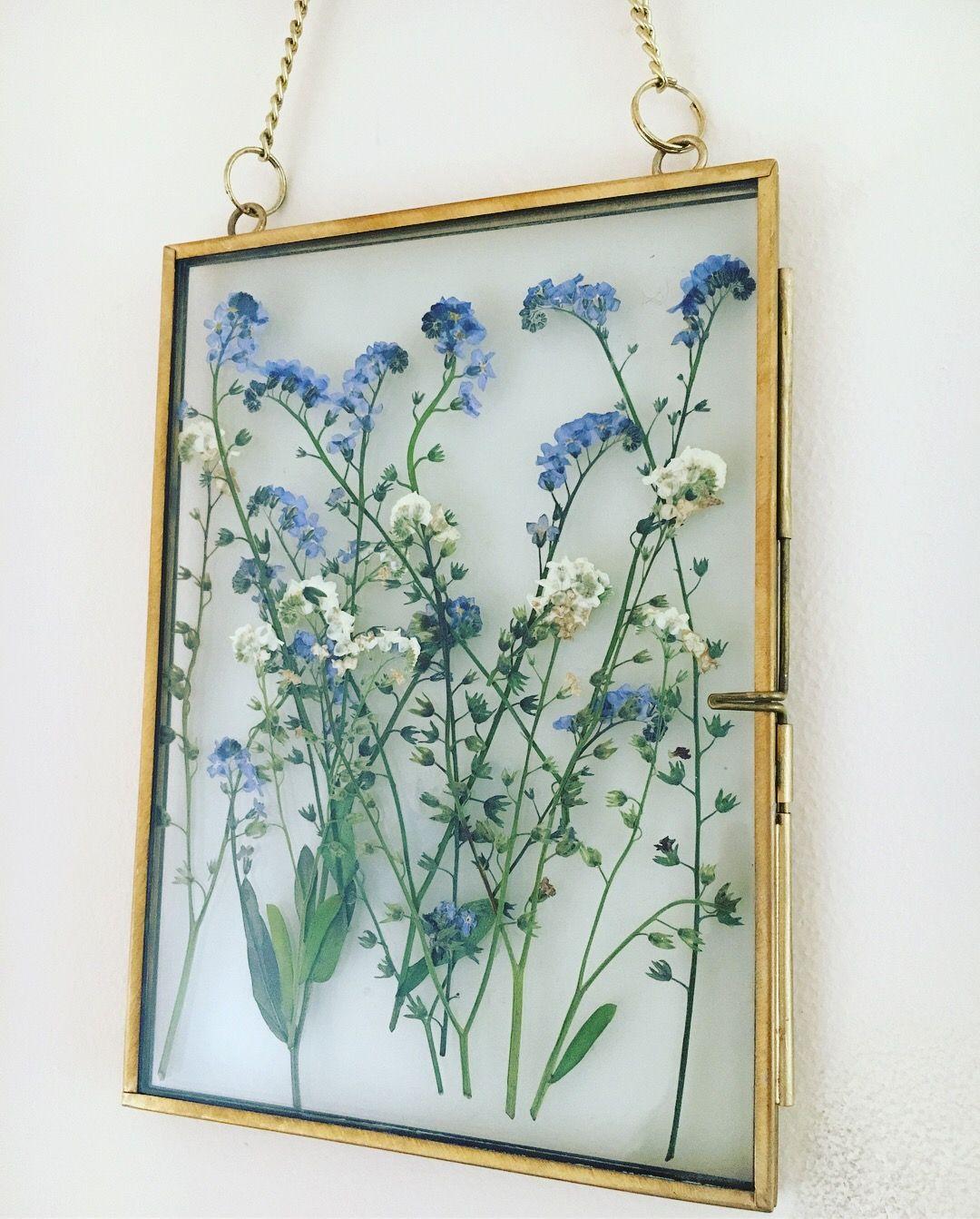 Framed pressed flowers. me nots. Pressed flowers