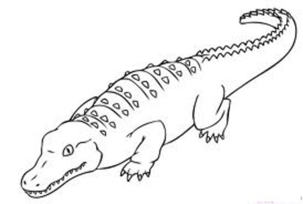 Alligator Coloring Pages   Free Coloring Pages   Pinterest