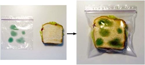 camouflage moldy sandwich bags....bahahaha keep your lunch from getting stolen!