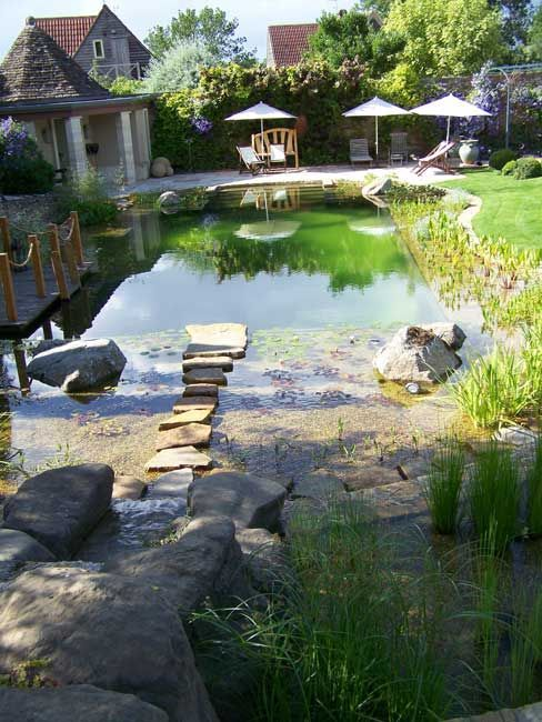 The Benefits Of Natural Swimming Pools No Chemicals Attracts Wildlife Blends In Your Backyard F Natural Swimming Pools Natural Swimming Ponds Backyard Pool
