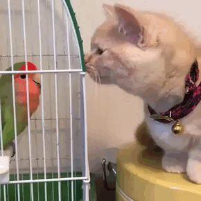 고양이:얘 뭐냐앙...? 앵무새:팍 씨 꺼져