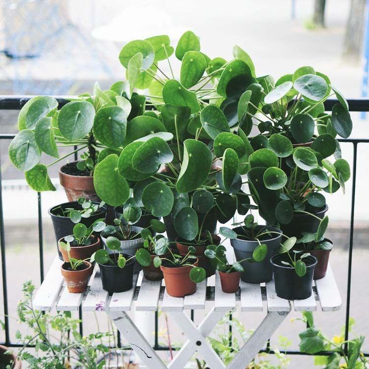 Houseplant inspiration from instagram best of for Jardines decoraciones plantas