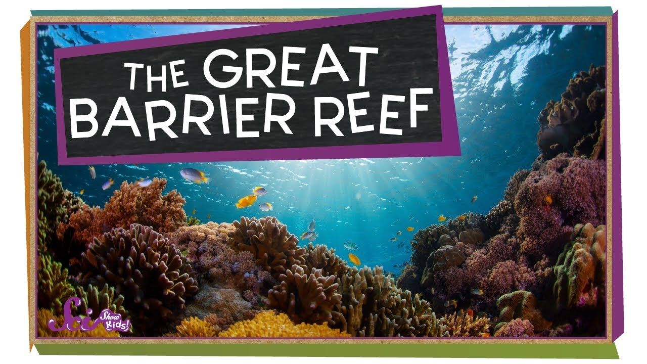 Check Out The Great Barrier Reef Great Barrier Reef Ocean Animals For Kids Ocean Lesson Plans