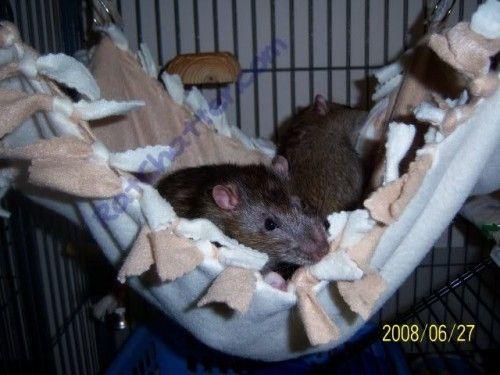Tutorial for no-sew fleece rat hammocks