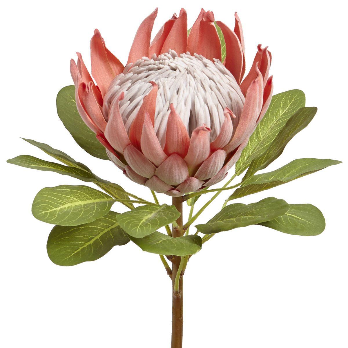 Oversized Faux Queen Protea Stem Pier 1 Imports Protea Art Botanical Flowers Flower Painting