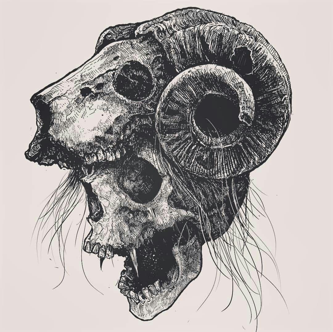 Животные черепа картинки