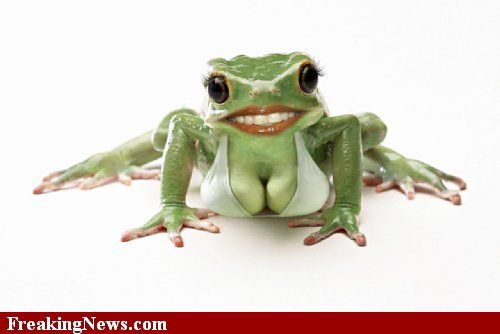 Freaky Frog With Large Breasts  Funny Frogs, Cute Frogs -1358