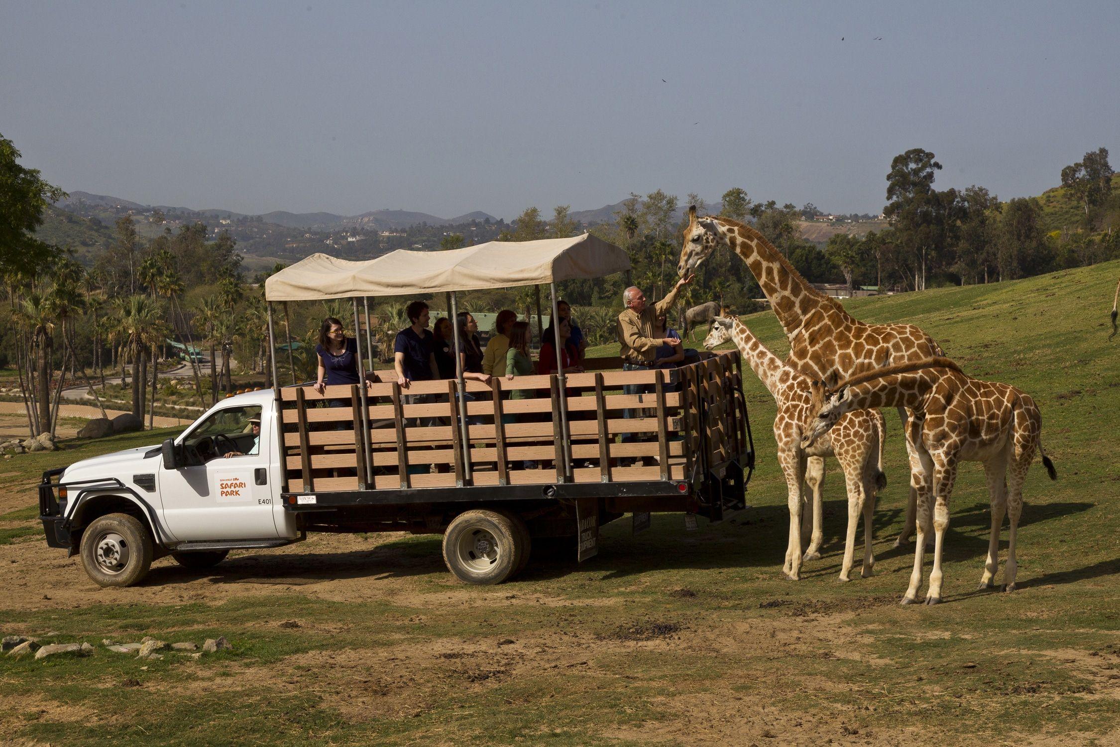 San Diego Zoo Safari Park Detailed Guide 2020 San Diego Zoo