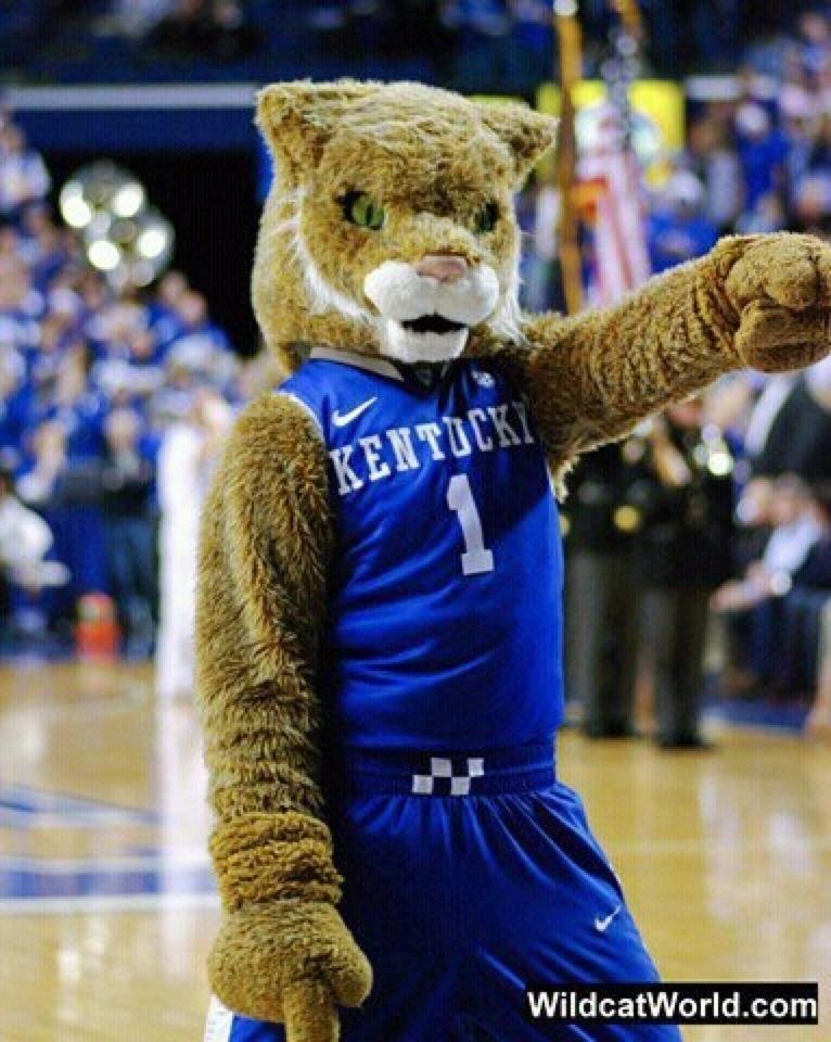 Best Mascot Ever Go big blue, Wild cats, Big blue