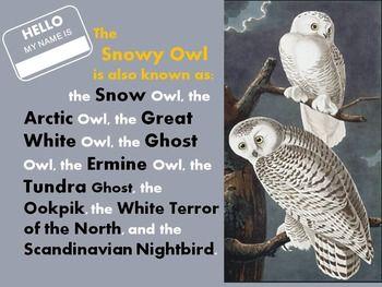 Owls | Snowy owl art and crafts help | Owl, Owl art, Snowy Owl - photo#17