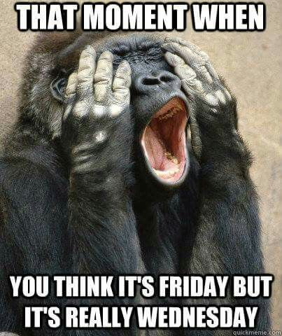 What I Thought It Was Friday All Day Wednesday Memes Monkeys Funny Wednesday Humor