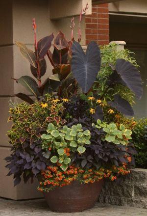 beautiful container garden by krista plants  shrubs Pinterest - maceteros para jardin