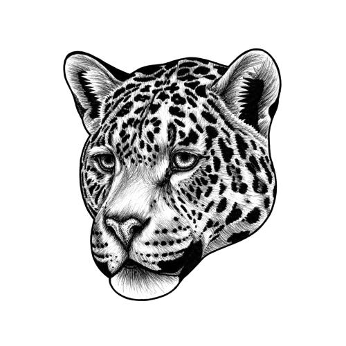 Jaguar Ink Illustration Ink Illustrations Jaguar Print Illustration Art