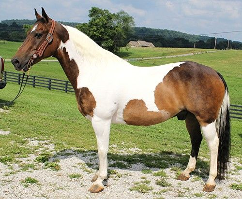 Best Adams Horse And Mule Co 1 Horses Animals 400 x 300
