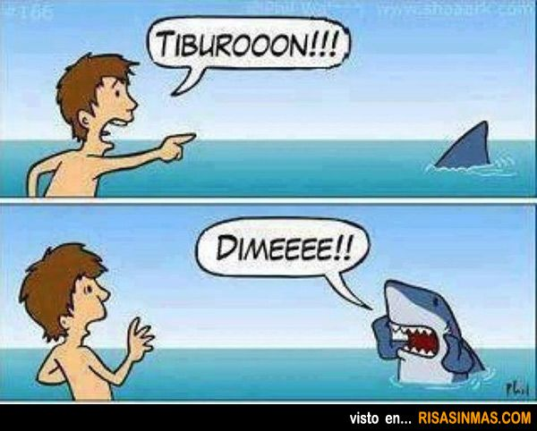 Tiburon Educado Very Funny Pictures Sharks Funny Funny
