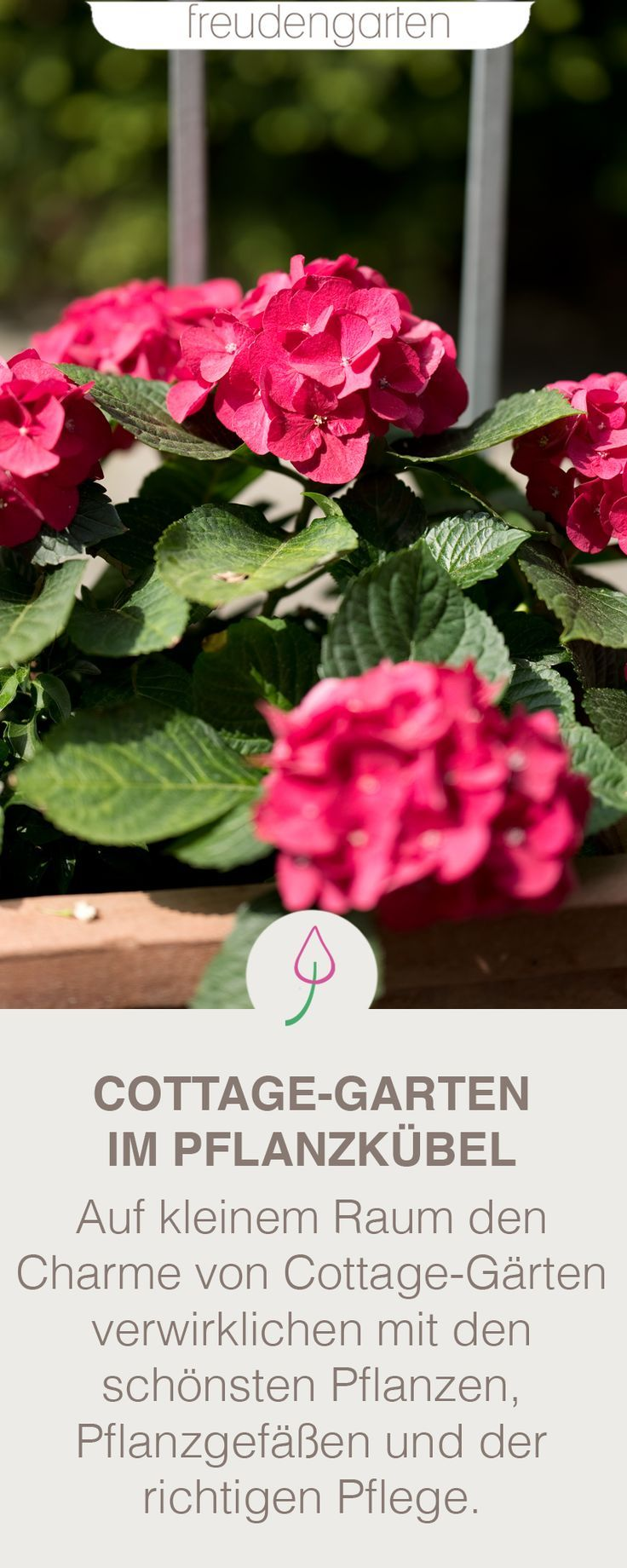 Cottage Garten Im Topf Cottage Garten Blumen Fur Garten Und