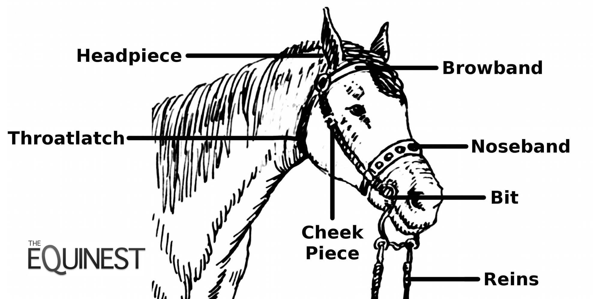 western bridle on horse horse bridle diagram