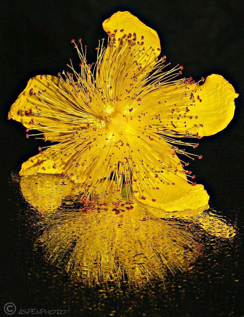 Yellow Splash By Wappy Al My Interflora Mum Pinterest Flowers