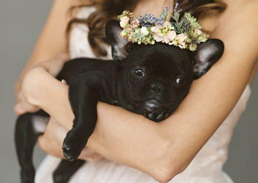 The Flower Girl Attackofthecute Com Dog Wedding Cute Animals