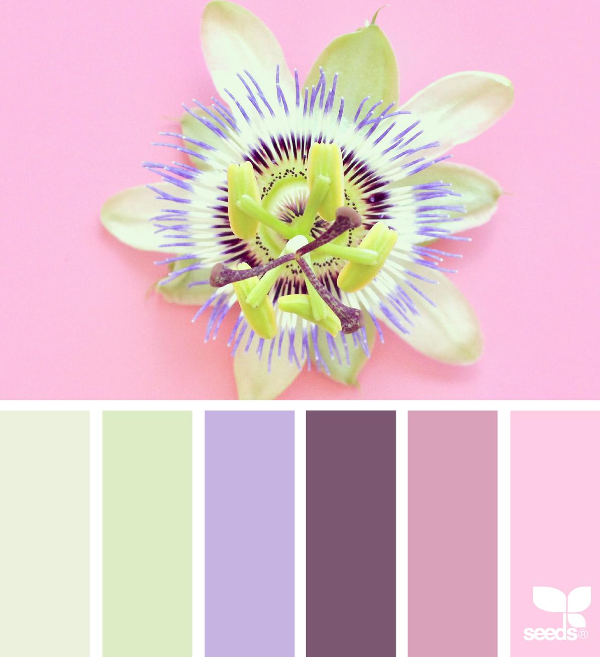 Color Flora | Flora, Design seeds and Color inspiration