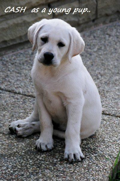 Cash as a puppy