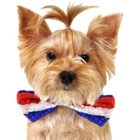 6dafeadfb030 Red, White & Blue Sequin Dog Bow Tie - Party City | Animals Dressed ...