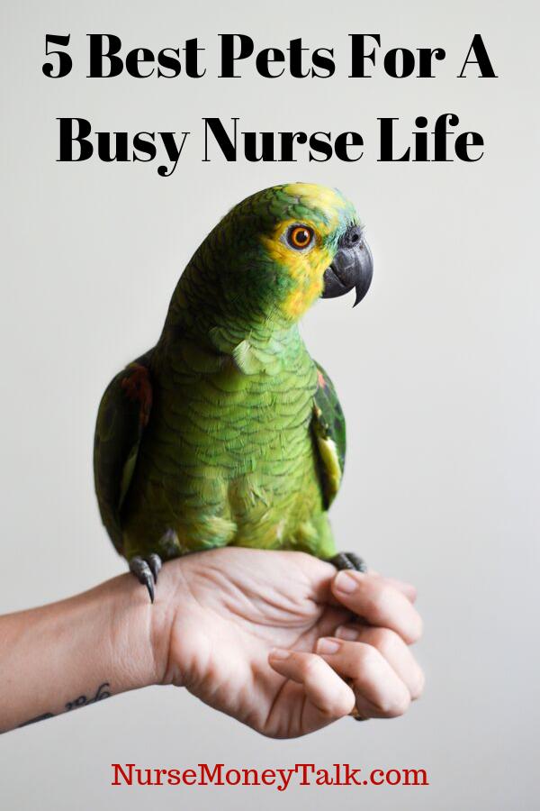 5 Best Pets For Nurses Cheap Pet Insurance Pet Birds Pets