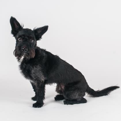 Dogs Adoption Pets Animals