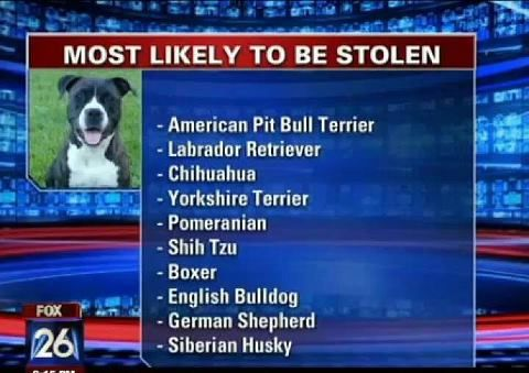 Did you know? I believe it. Out pitbull was stolen when we went on vacation (mother in law was caring for him and called to tell us). Needless to say our trip was ruined. We were devastated.